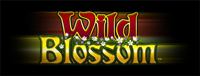 Play slots at Quil Ceda Creek Casino near Everett on I-5 like the new and exciting Wild Blossom!